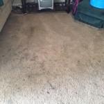 Arlington_Heights-Dirty-Carpet