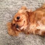 Arlington_Heights-Dog-Poop-Cleaning