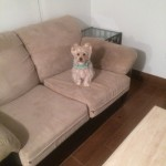 Arlington_Heights-Sofa-Pet-Stain-Cleaning