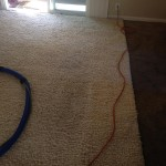 Arlington_Heights-Traffic-Area-carpet-cleaners