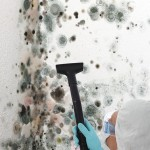 Black-Mold-Remediation-Arlington_Heights
