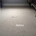 Cranberry Juice Stain Removal Arlington_Heights A