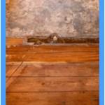 Wall-Mold-Removal-Arlington_Heights